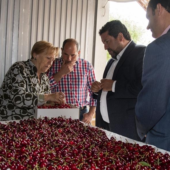 La Diputación impulsa el consumo de la cereza autóctona