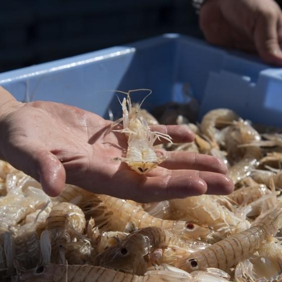Diputación promociona la dualidad gastronómica de la costa y el interior